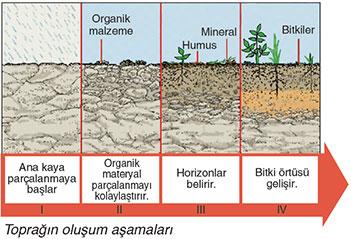Toprak oluşum aşamaları