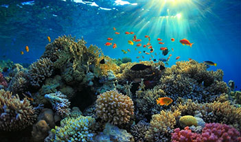 Mercan resif