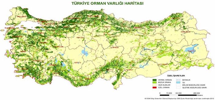 Türkiye'nin Orman Varlığı Haritası
