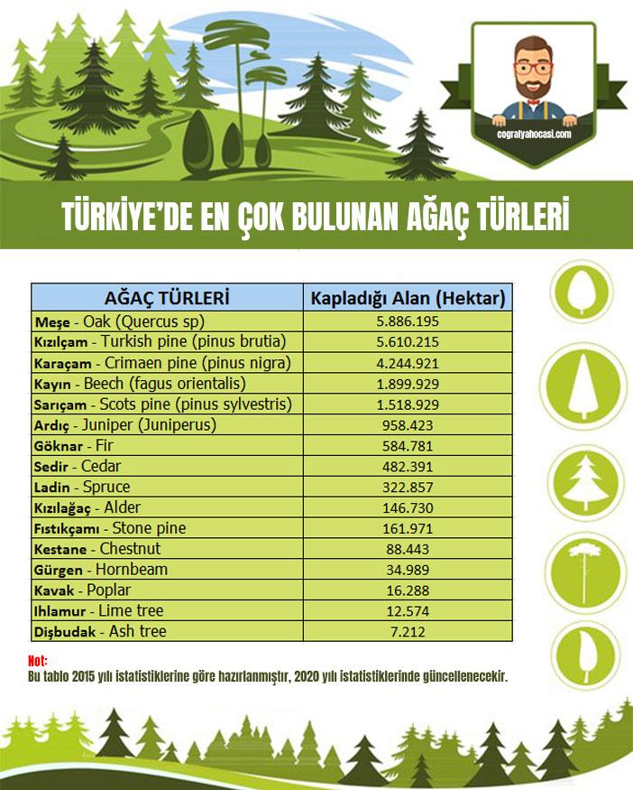 Türkiye'de En Çok Bulunan Ağaç Türleri