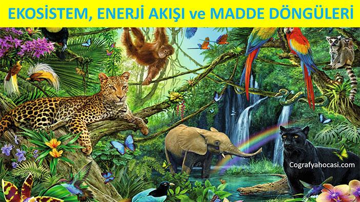 Ekosistem, Enerji akışı ve Madde Döngüleri
