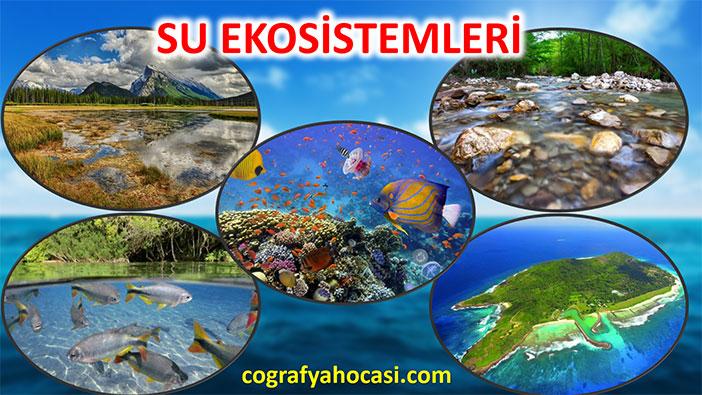 Su Ekosistemleri Slayt