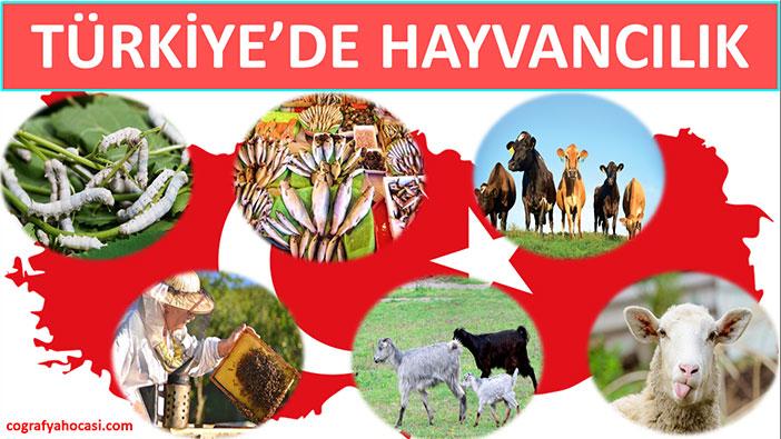 Türkiye'de Hayvancılık