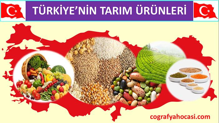 Türkiye'nin Tarım Ürünleri