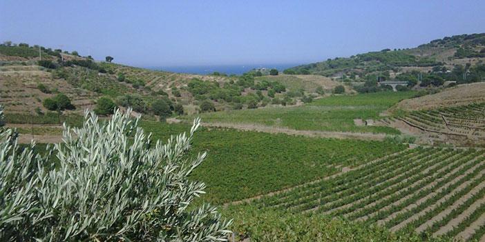Akdeniz İklimi nedir