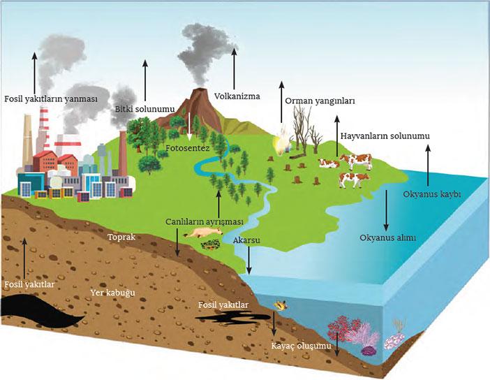Karbon Döngüsü nedir