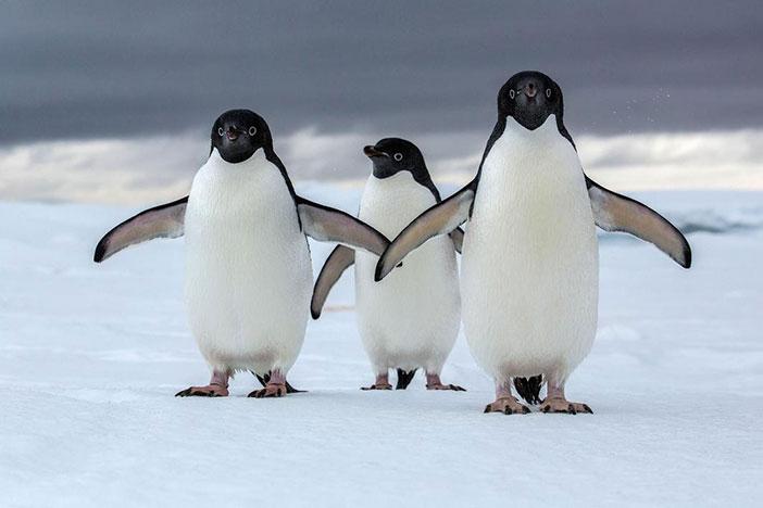 Kutup İklimi nedir