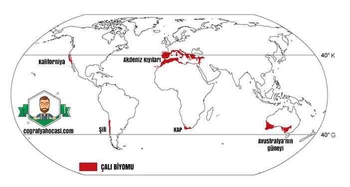 Çalı Biyomu haritası