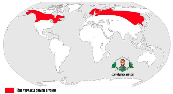 İğne Yapraklı Orman Biyomu haritası
