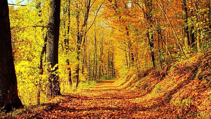 Yaprak Döken Orman Biyomu nedir