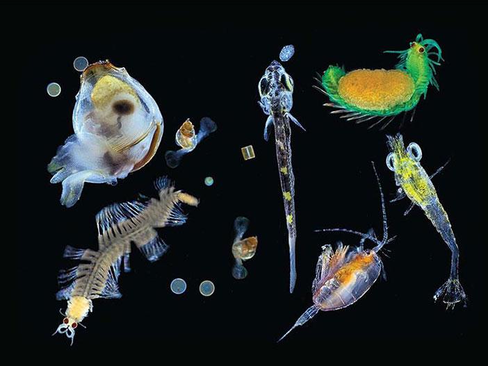 Plankton nedir