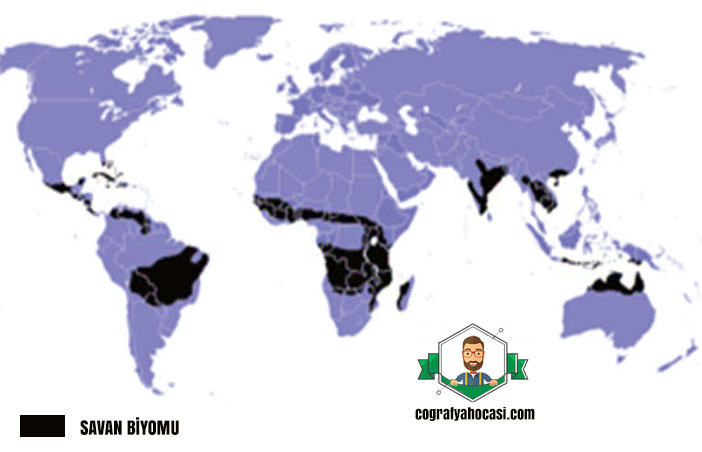 Savan Biyomu haritası
