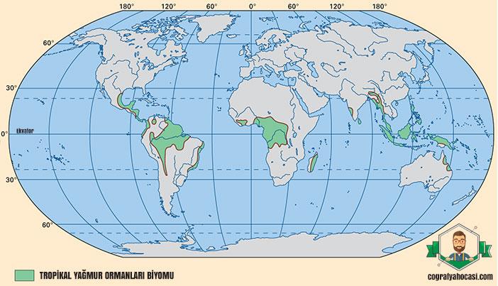 Tropikal Yağmur Ormanları Biyomu nedir