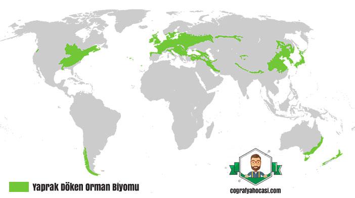Yaprak Döken Orman Biyomu haritası