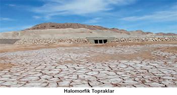 Halomorfik Topraklar