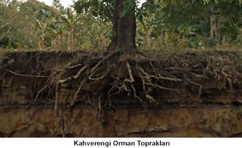 Kahverengi Orman Toprakları