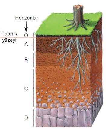 Toprak Katmanları nedir