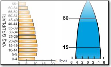 arı-kovanı-nüfus piramidi